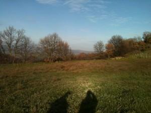 Panorama campo Fattoria la Maliosa