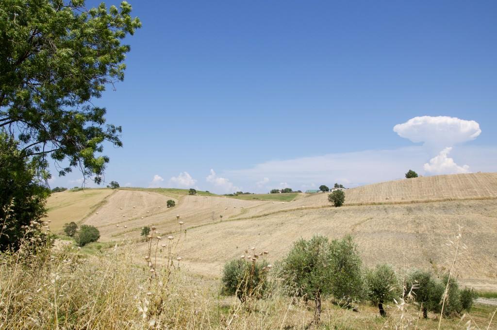 Panorama collinare e ulivi