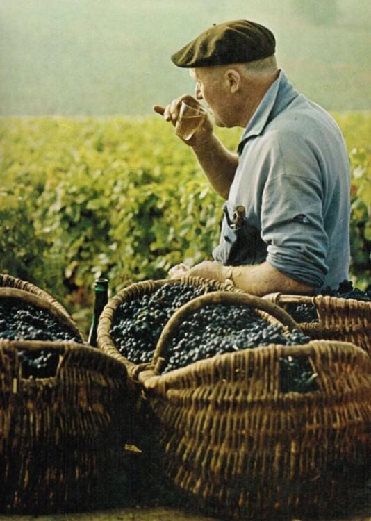 Vino naturale La Maliosa - Centro Italia