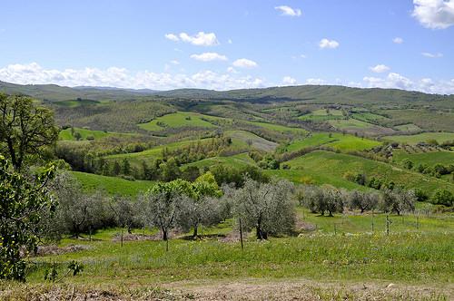 Panorama-e-uliveto-antico-di-Fattoria-la-Maliosa