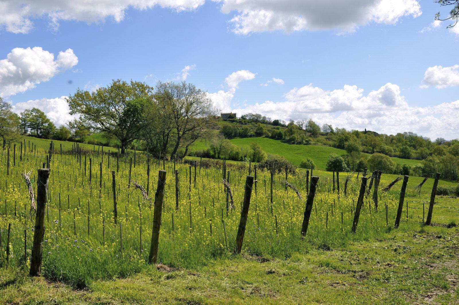 Vigna - coltivazione biodinamica