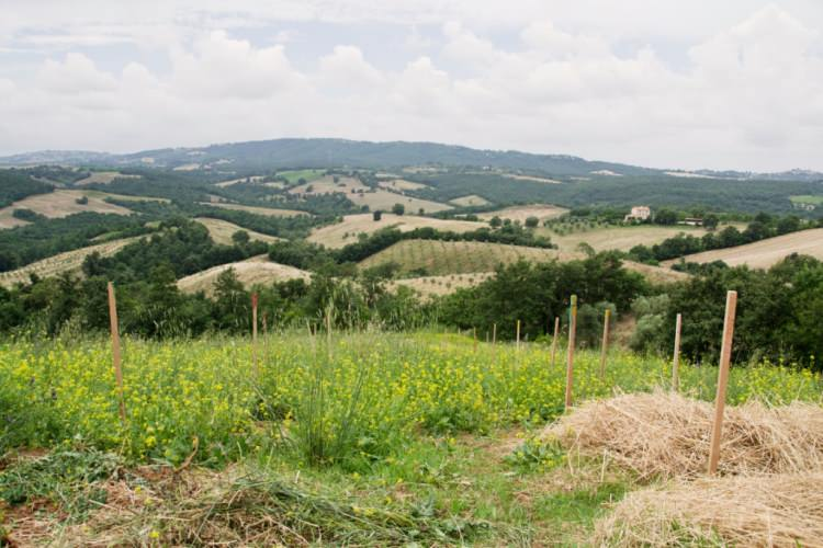 Piano di Indirizzo Territoriale della regione Toscana