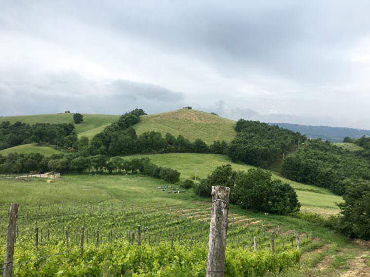 ヴィーニャマドレ(母なる畑)のに新たに植えられたぶどうからモンテカバッロを望む。地面に茶色く見えるのはワラを敷いたマルチング(イタリア語でpacciamatura-パッチャマトゥーラ)